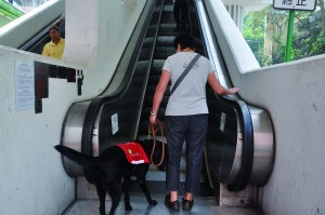 A young guide dog learns to use an escalator in Hong Kong